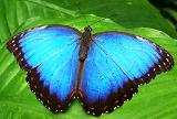 Крылья бабочки смогут вдохновить ученых на создание нов технологию солнечных батарей