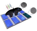 Крыло бабочки поможет утроить поглощение света солнечными элементами