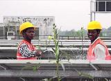 В индийском международном аэропорту Cochin между солнечными панелями успешно выращивают тонны овощей