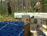 Супермаркет в Бельгии выращивает собственные фрукты и овощи на крыше, применяя солнечные панели