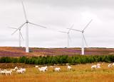Всего за полгода ветровые электростанции Шотландии произвели в два раза больше электроэнергии, нежели требуется на нужды этой страны