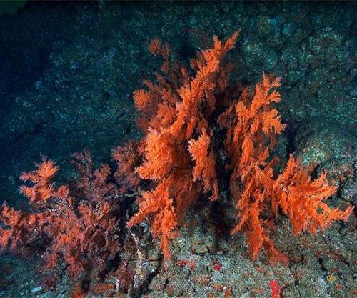 Красные водоросли являются одними из самых эффективных организмов